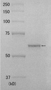 10-105_Fig1