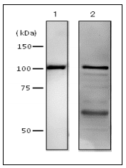 61-012-fig1