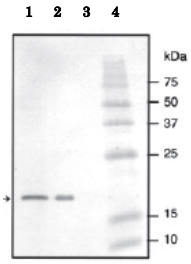 64-004-fig1