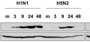 65-111-fig1