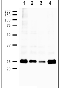 65-155-fig1