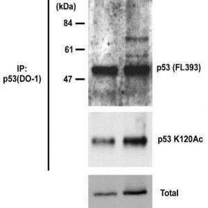 71-131_Fig1