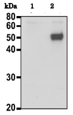 73-018-fig1