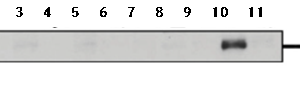 73-022-fig1