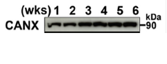 73-026-fig1