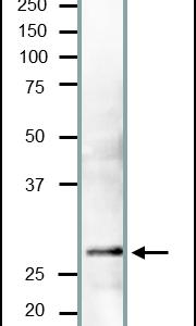 62-160-flg1
